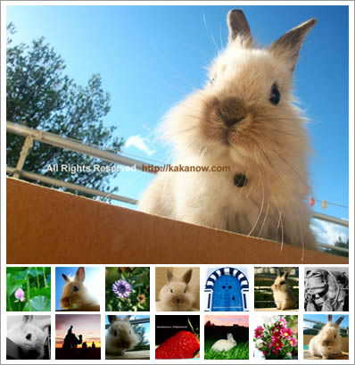 Photo Blog of KaKa and KaKa's rabbit Lapinpin