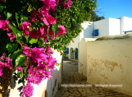 Bougainvillea in Sidi-Bou-Said, a blue and white town in Tunisia, Mediterranean coast, North Africa