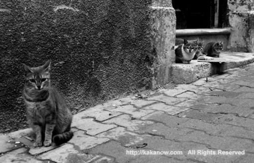 Stray cats in the street, Tunis, Tunisia, North Africa. Photo by kaka. http://kakanow.com