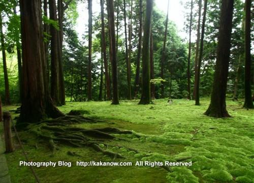 Very humid, suitable for bryophyte. Toshodai-ji Temple, Nara Japan, Photo by KaKa, http://kakanow.com