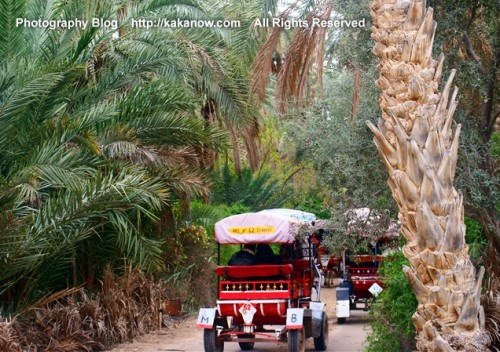 Taking little carriage to go into a lovely oasis in the desert of Tunisia. North Africa, Photo by KaKa