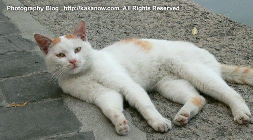 A stray cat in the Summer Palace in Beijing, China. Photo by kaka. http://kakanow.com
