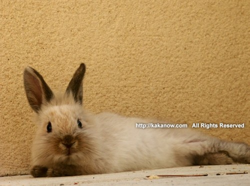 The lazy summer has passed. Little rabbit Lapinpin in Marseille, southern France. Photo by KaKa.