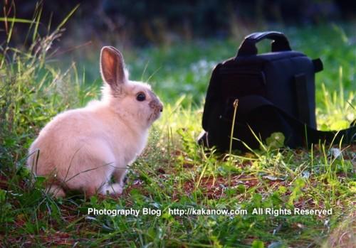 Rabbit Lapinpin alway go with KaKa to take photo, Marseille, France. Photo by KaKa