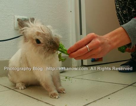 Little rabbit Lapinpin love broccoli very much. France travel, Marseille. Photo by KaKa.