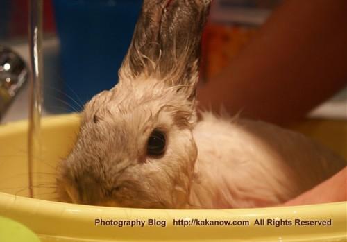 Little rabbit Lapinpin in bath. France travel, Marseille. Photo by KaKa.