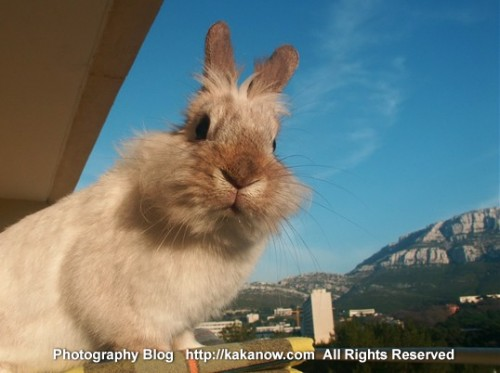 France Marseille Luminy, KaKa's friend, little rabbit Lapinpin. Photo by KaKa.