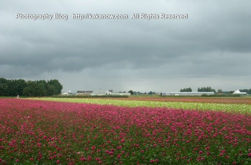 The Netherlands car drive travel, Holland countrside hanada, Photo by KaKa.
