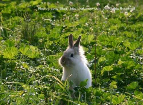 Little rabbit Lapinpin in the grass, Marseille, France. Photo by kaka.