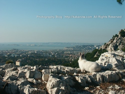 Little rabbit watch panorama of the city, Lapinpin in Marseille, France. Photo by kaka.