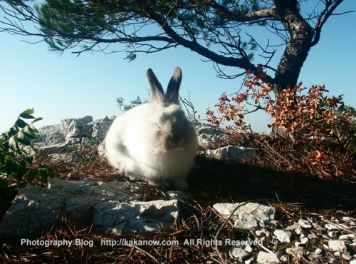 Little rabbit sunbathing, Lapinpin in Marseille, France. Photo by kaka.