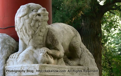 Stone lion in Yiheyuan(the summer palace), Beijing, China. Photo by KaKa.