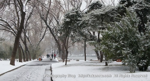 Beautiful spring snow in Beijing Zoo, China. Photo by KaKa.