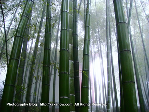 China, Chongqing travel, Yongchuan Bamboo-Sea, photo by KaKa.