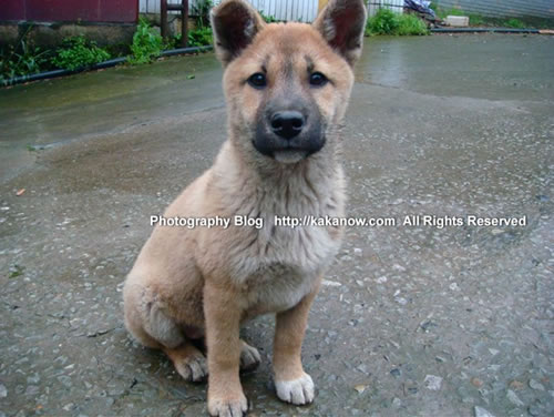China, Chongqing travel, Yongchuan Bamboo-Sea, roadside puppy. Photo by KaKa.