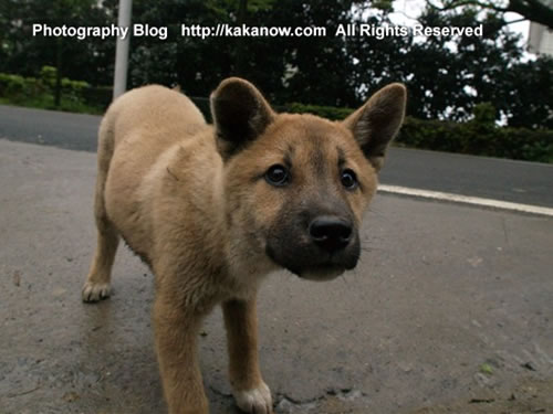 China, Chongqing travel, Yongchuan Bamboo-Sea, roadside puppies. Photo by KaKa.