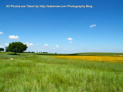 China travel, Inner Mongolia, Horqin Prairie, flowers. Photo by KaKa.
