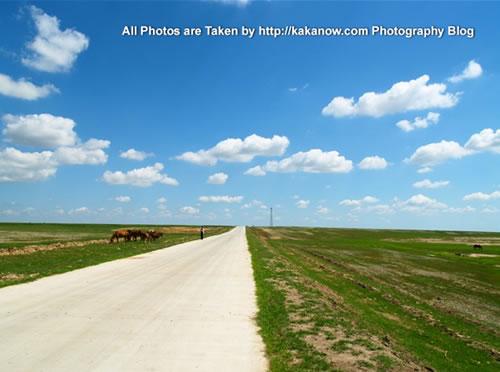 China travel, Inner Mongolia, Horqin Prairie, horses. Photo by KaKa.