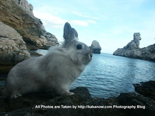 France, Marseille, rabbit Lapinpin and a natural rabbit stone at the seaside of Les Calanques. Photo by KaKa.
