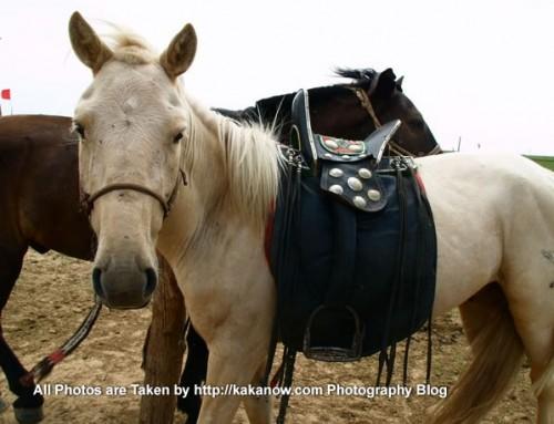 China travel, Inner Mongolia, Ulanhad, Dalinor, horse. Photo by KaKa.