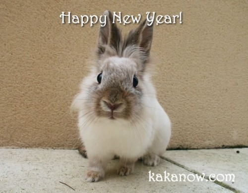 France, Marseille, little rabbit Lapinpin. Happy New Year! Photo by KaKa.