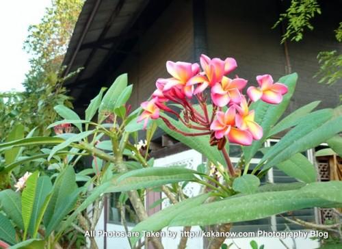 Thailand travel, Bangkok, beautiful flowers. Photo by KaKa.