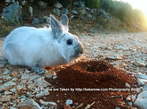 France, Marseille, rabbit Lapinpin go into the mountain and find an ants nest. Photo by KaKa.
