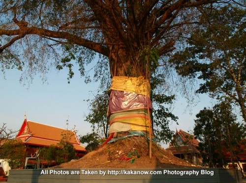 Thailand travel, Bangkok, a blessing tree in community temple. Photo by KaKa.