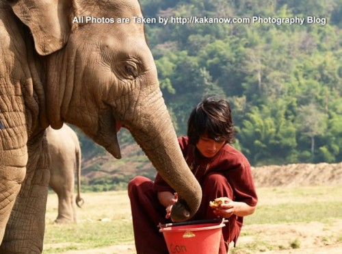 Thailand travel, Chiang Mai, in an elephant camp, a baby elephant and its keeper. Photo by KaKa.
