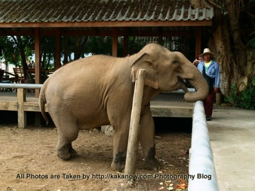 Thailand travel, Chiang Mai, in an elephant camp. Photo by KaKa.