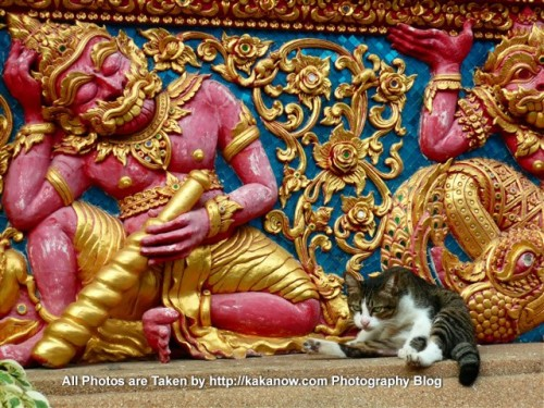 Thailand, Chiang Mai, a small cat in the temple at the river bank. Photo by KaKa.