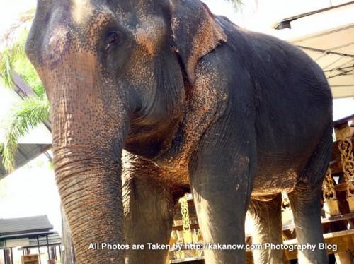 Thailand travel, elephants in Ayutthaya. Photo by KaKa.