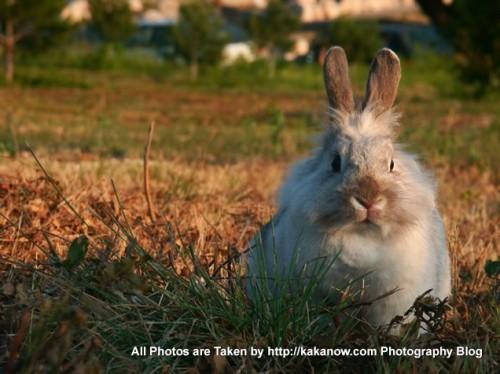 France Marseille, Pet rabbit Lapinpin, Autumn. Photo by KaKa.