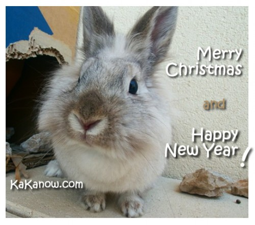 France, Marseille, Pet rabbit Lapinpin. Christmas and New Year. Photo by KaKa.