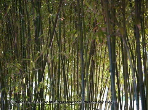 China travel, Shandong Province, Jinan, in the Baotu Spring Park. Photo by KaKa.